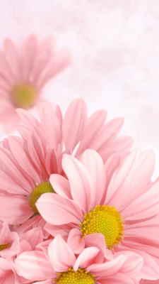 Flores para Regalar, Floristería Online, Ramos de Flores, Arreglos Florales, Floristerías en Sevilla, Envíos Urgentes Florales