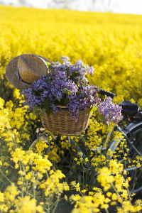 Ramo Flores Grecia, Floristería Online, Ramos de Regalo, Floristas Profesionales, Enviar Flores Urgentes,Comprar Flores en Sevilla