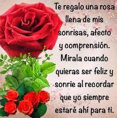 Ramo de 6 Rosas, Regalar Rosas, Ramos de Rosas para Regalo, Arte Floral, Envío de Arreglos Florales, Floristería Macarena, Floristería en Sevilla