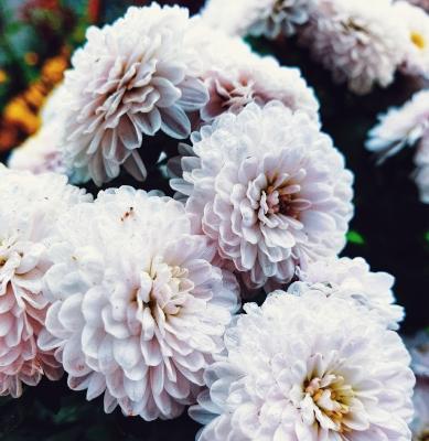 Centro Lágrima tonos Blancos, Enviar Flores Blancas al Tanatorio, Flores para Difuntos, Floristería en Sevilla, Comprar Flores Online