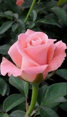 Ramo Funerario Blanco, Flores Blancas para el Tanatorio, Ramo de Flores para Defunciones, Ramos para dar en el Tanatorio, Flores para Difuntos