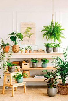 Planta Hortensia, Planta de Decoración, Planta para Cumpleaños, Planta par Regalar, Comprar Flores Online, Floristería Macarena