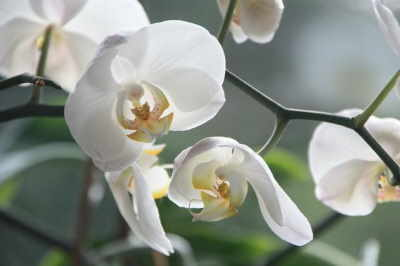 Regalar orquídeas a mamá