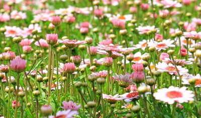Ramo Flores Suiza, Flores para Sevilla, Floristería Online, Arreglos Florales, Ramos de Flores Elegantes, Floristería Macarena