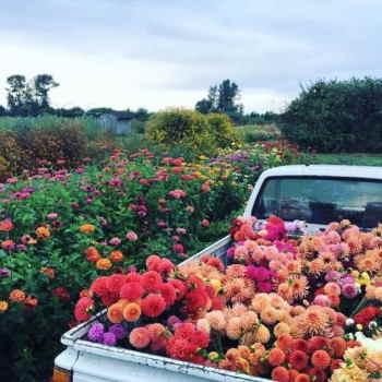 Ramo Flores Malta, Comprar Flores Online, Envios Florales Urgentes, Floristería Online, Ramos de Flores para Regalar, Flores Domicili