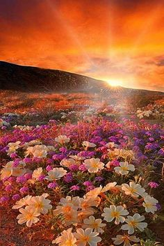 Floristerías Sevilla, Floristeria online, Floristeria Macarena, Floristerias baratas en Sevilla, Dia de la mujer ramos de flores, envío urgente de flores