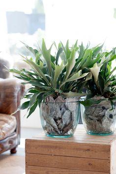 Cesta Planta Haití, Cesta de Plantas, Plantas de Decoración, Plantas para Regalar, Floristería de Sevilla, Comprar Flores Online