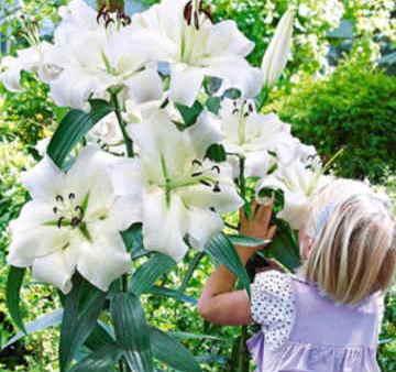 Ramos Flores Finlandia, Floristería Online, Arreglos Florales, Ramos de Flores para Regalar, Flores Blancas, Comprar Flores, Flores en Sevilla